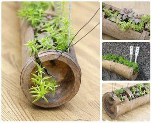 易控创业 项目代理 植物 植物项目作品      古朴的竹子本身就是植物图片