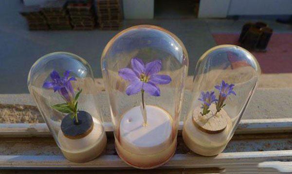 创意手工diy玻璃杯里面的小花标本