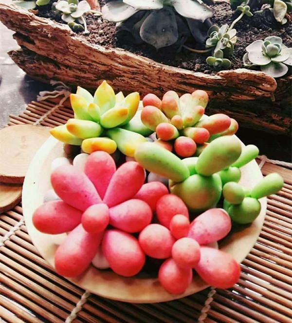创意陶艺diy软陶制作萌肉的多彩夏天